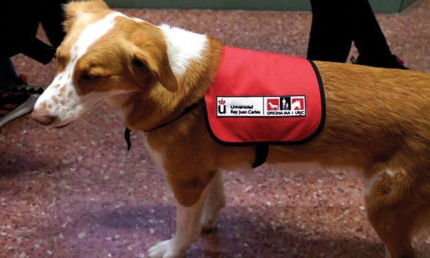 En marcha un programa de apoyo con perros a niños y niñas con autismo